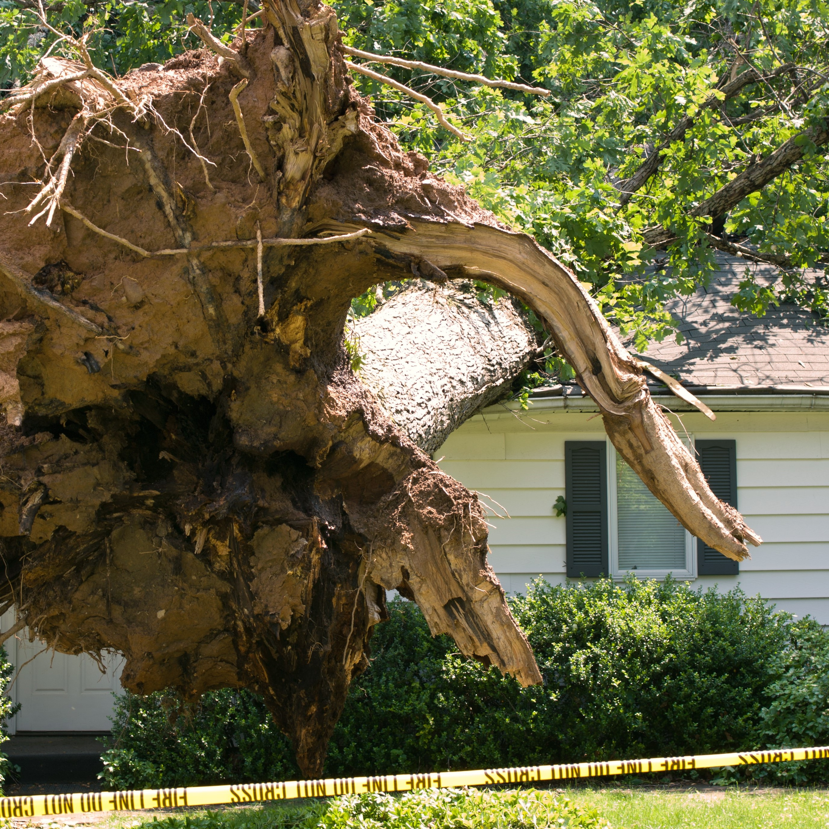 A tree that has fallen on a roof.